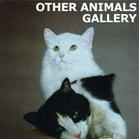 other animals gallery